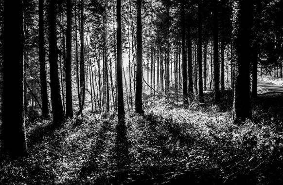 Forêt - s'orienter
